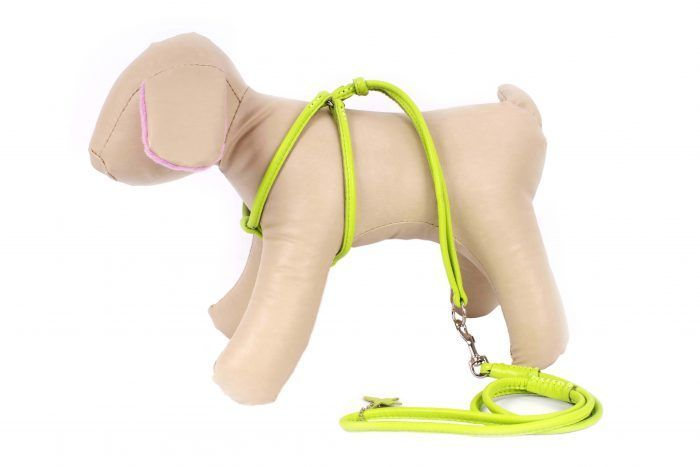 Step-in dog Harness- All in one dog harness