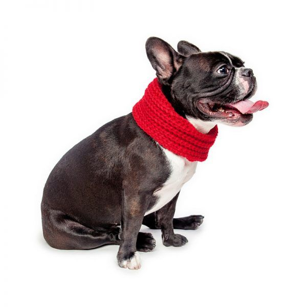 Infinity dog Scarf Red by Fab Dog