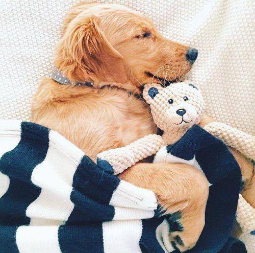 floppy-teddy-bear-dog-toy