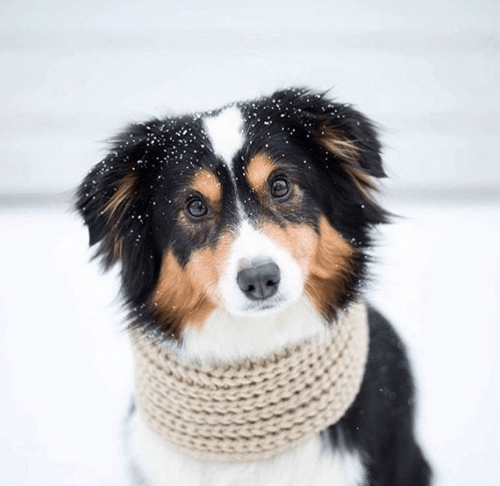 infinity oatmeal dog scarf by Fab Dog