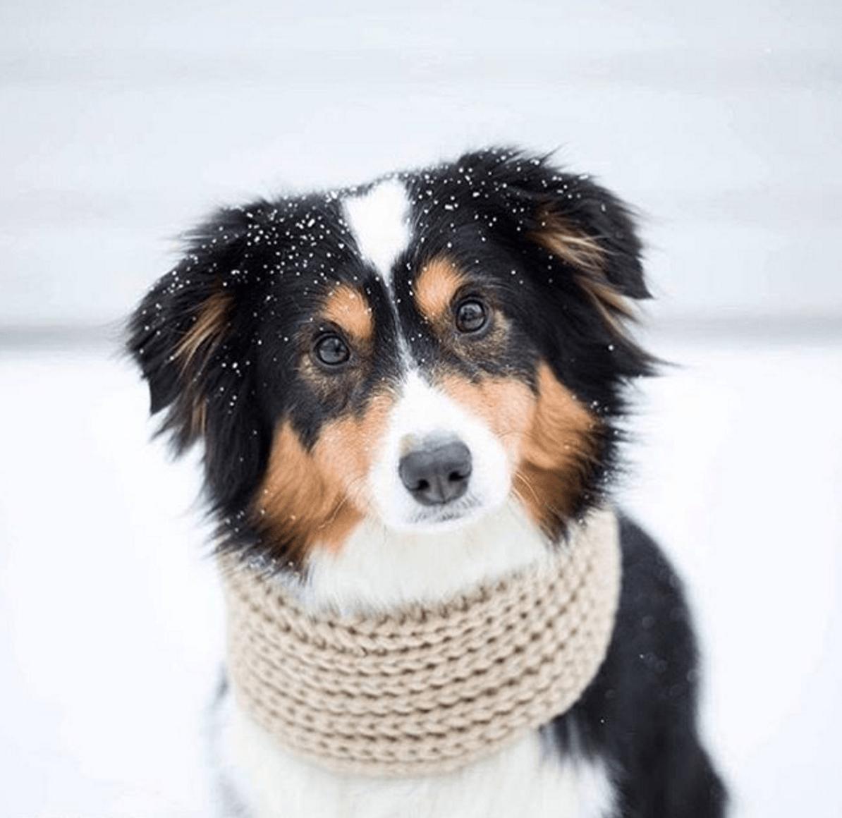 infinity oatmeal dog scarf by Fab Dog