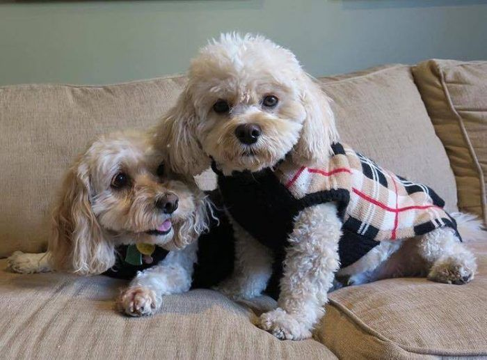 Fab-Dog-tan-plaid-dog-sweater