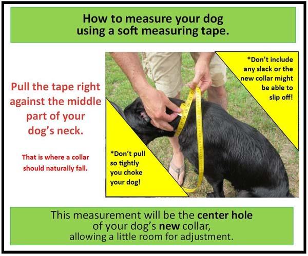 Measuring for a dog collar2