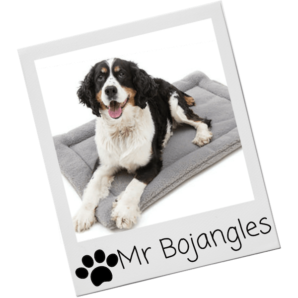 Dog beds for your pup